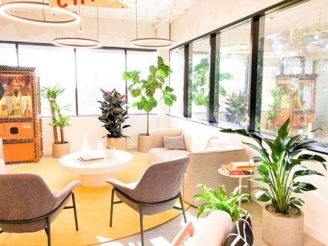 interior plant design and installation