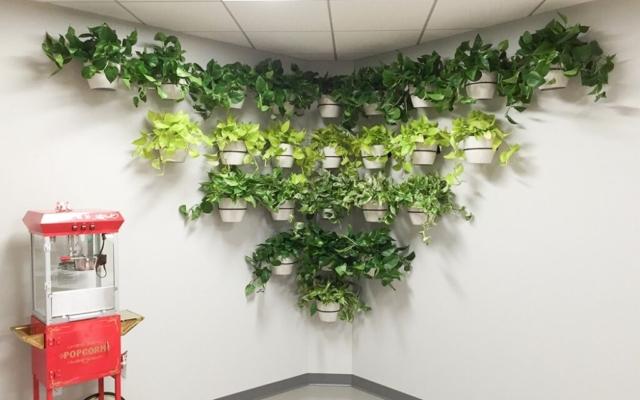living wall plant