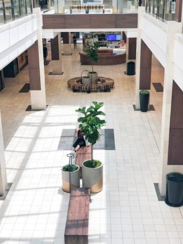 mall trees interior