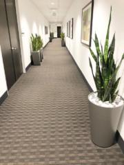 office plant design